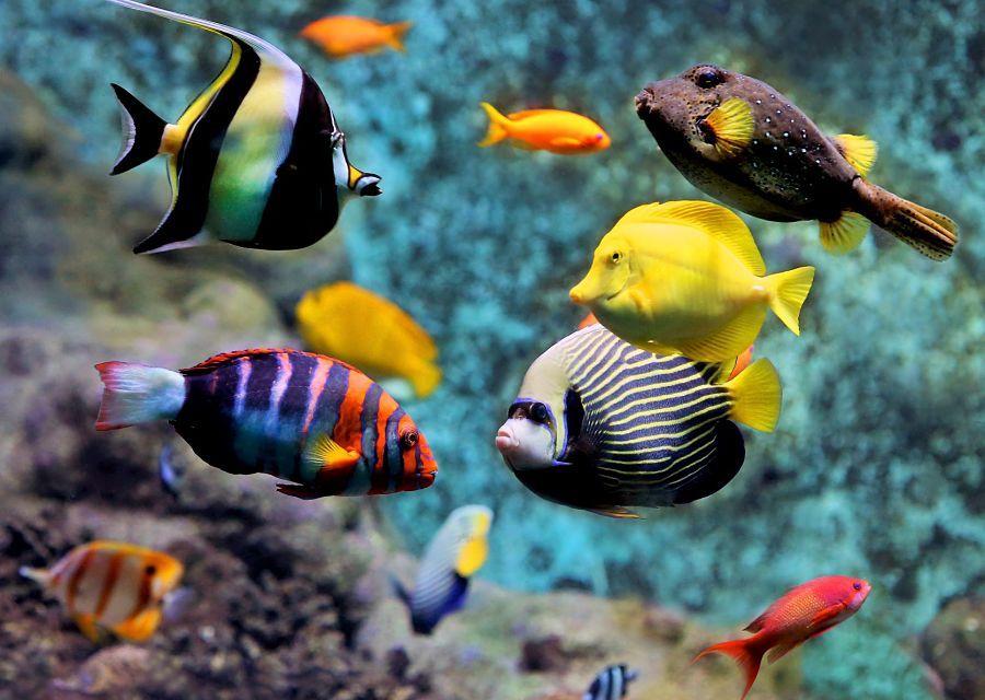 Aquarium van Artis - Foto: Artis, Ronald van Weeren