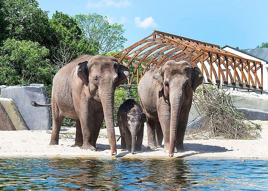 Azatische olifanten in Artis - Foto: Artis, Amber Dekker