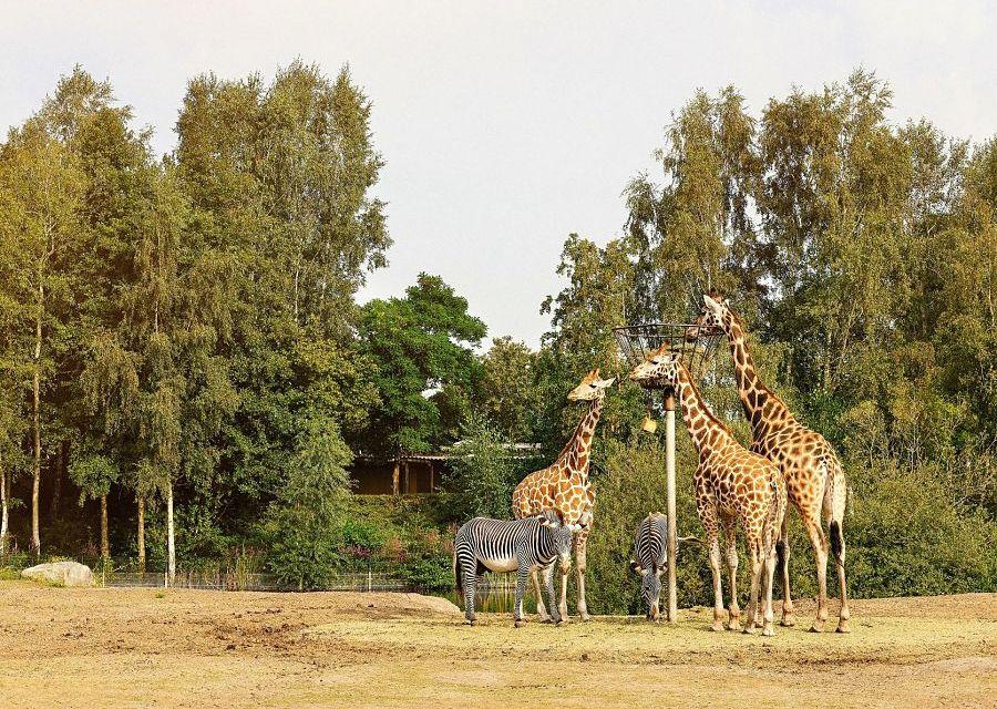 Giraffen en zebra's in Safaripark Beekse Bergen