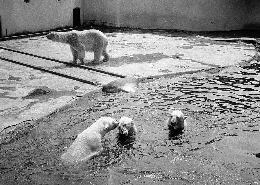 Blijdorp 1966 - Foto: Nationaal Archief, Jan Voets, Anefo