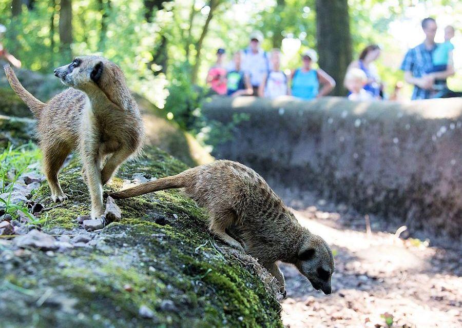 Burgers' Zoo in Arnhem