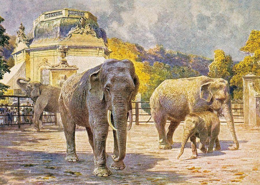 Historische postkaart Tiergarten Schönbrunn, Wenen