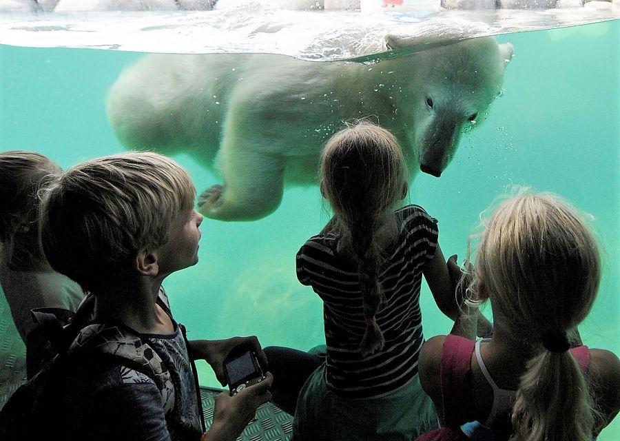 De IJsberenbaai in Nortica in Wildlands Adventure Zoo